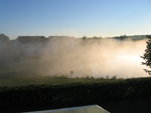 Mist Covers most of my backyard